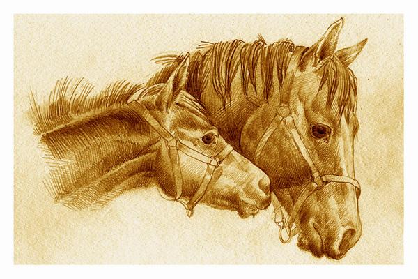 На этой странице размещены стихи о лошадях, анекдоты о лошадях..Но.